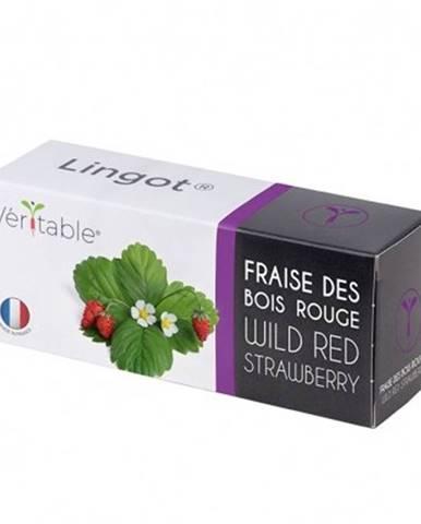 Bio lesná jahoda do inteligentných kvetináčov Véritable Lingot